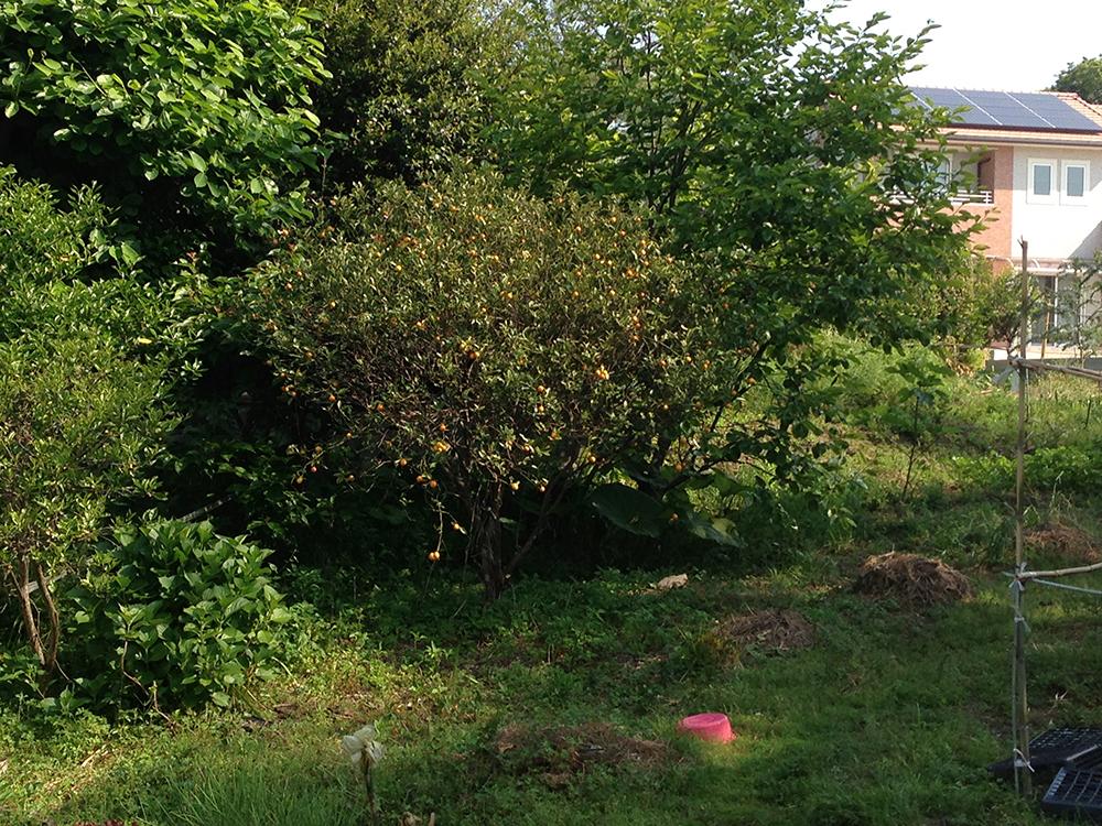 森のようですが、実家の裏庭です。おとんが趣味で野菜を育てています。